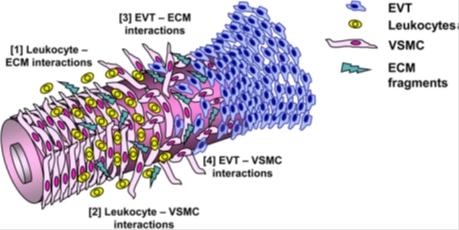 NK cells 2